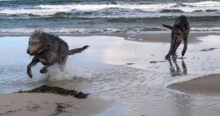 ausgelassene Toberei am Strand